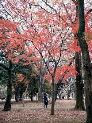 Yoyogi Park Running Route