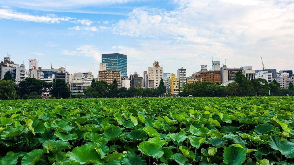 Why Ueno is the good place to live in Tokyo?